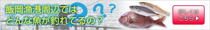 飯岡漁港ではどんな魚が釣れてるの?